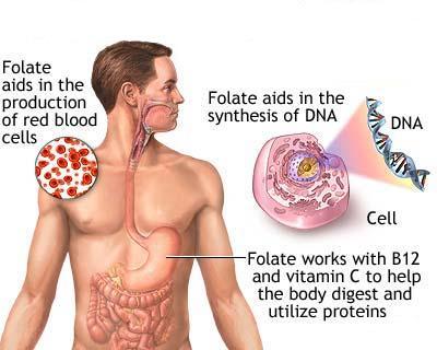 thừa hoặc thiếu acid folic deu co hại
